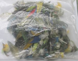 Bag of Macaw Feathers