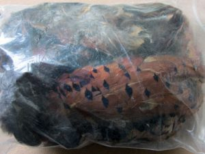 Bag of Ringneck Pheasant Feathers